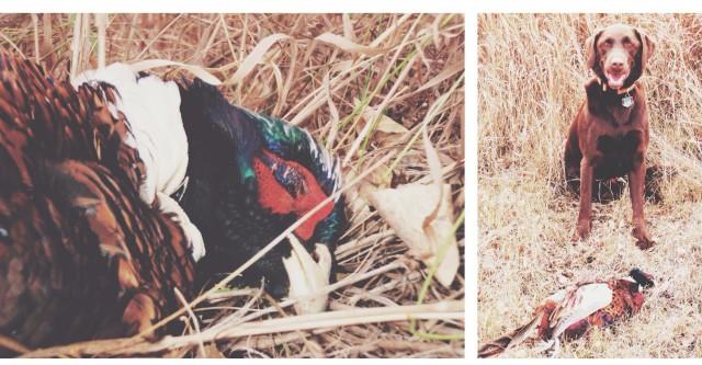 pheasanthead